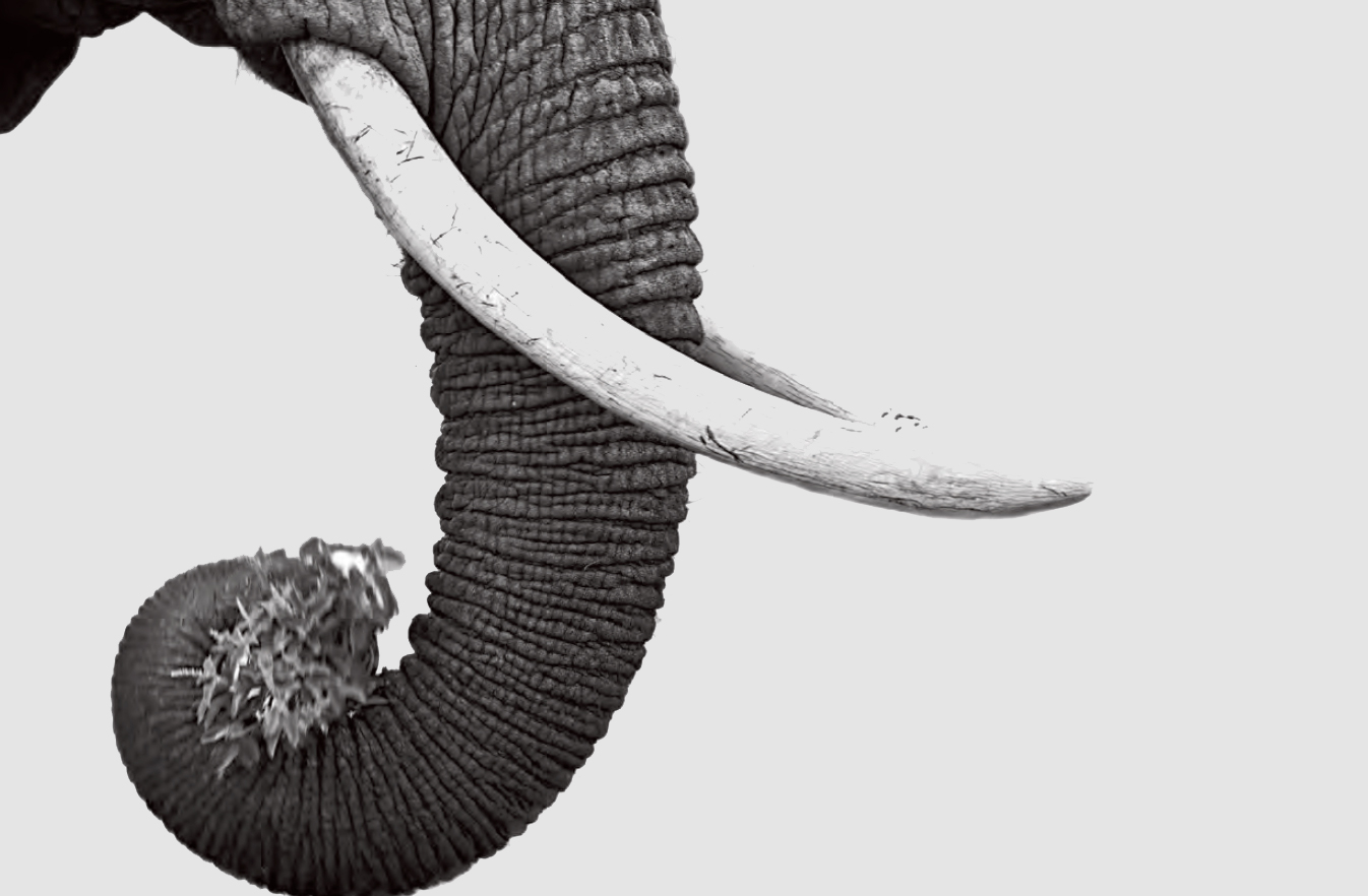 697725a92 Elephant trunk Daniel Pupius   Getty Images