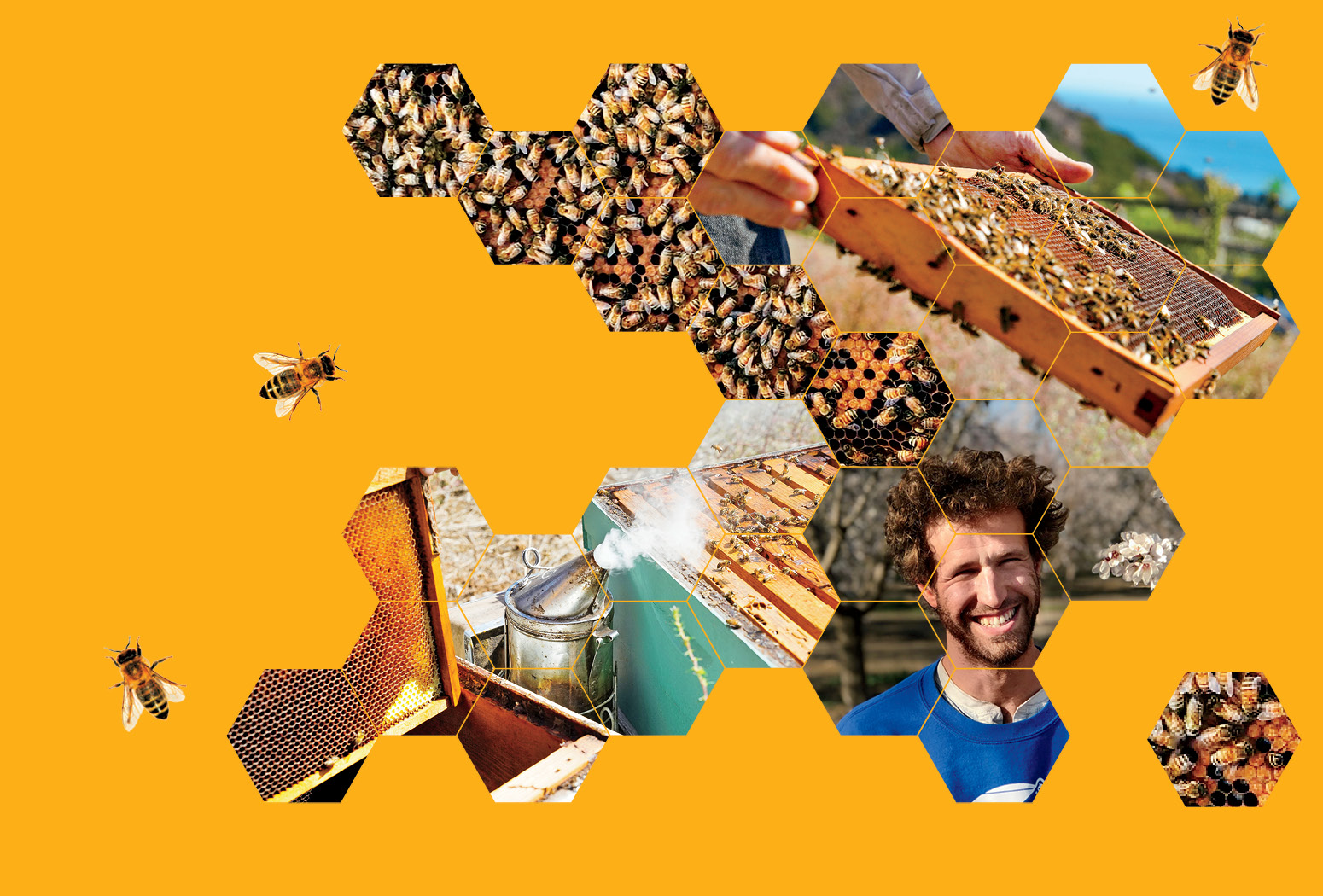 Photo collage of Eli Lichter-Marck, bees, and beehives