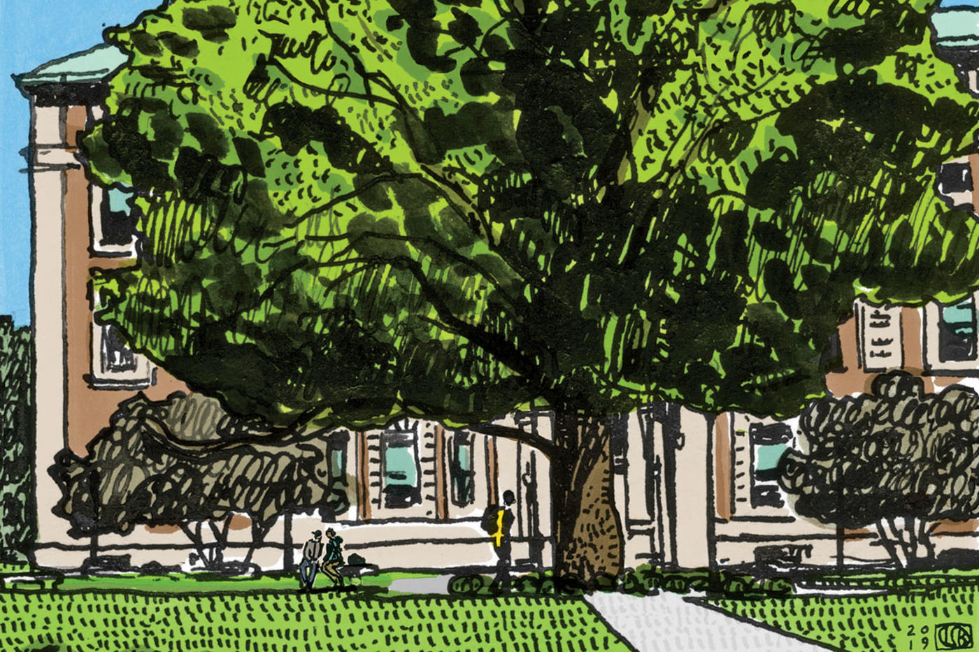 Illustration by Lauren Simkin Berke of the sycamore tree outside Columbia University's Mathematics building