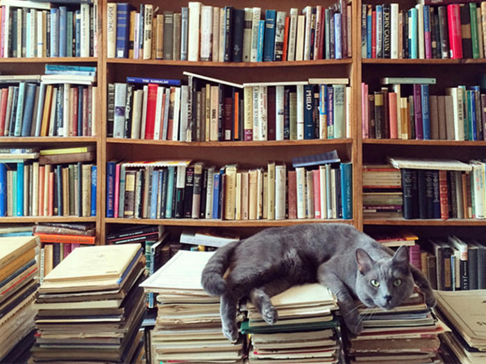 2020_01_Books_CAT
