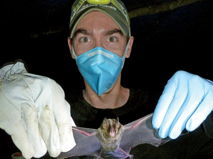 Columbia epidemiologist Simon Anthony inspects a vampire bat in the Brazilian rainforest
