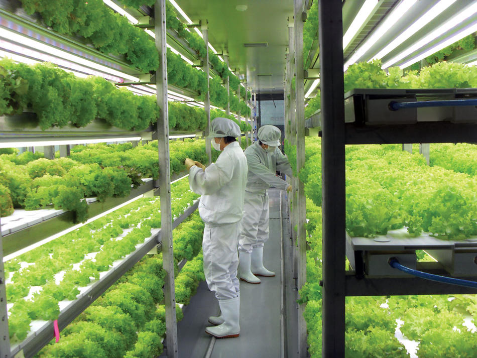 Scientists at a vertical farm in Suwon, South Korea, work in a hermetically sealed, clean-room environment. (Courtesy of Insungtec)
