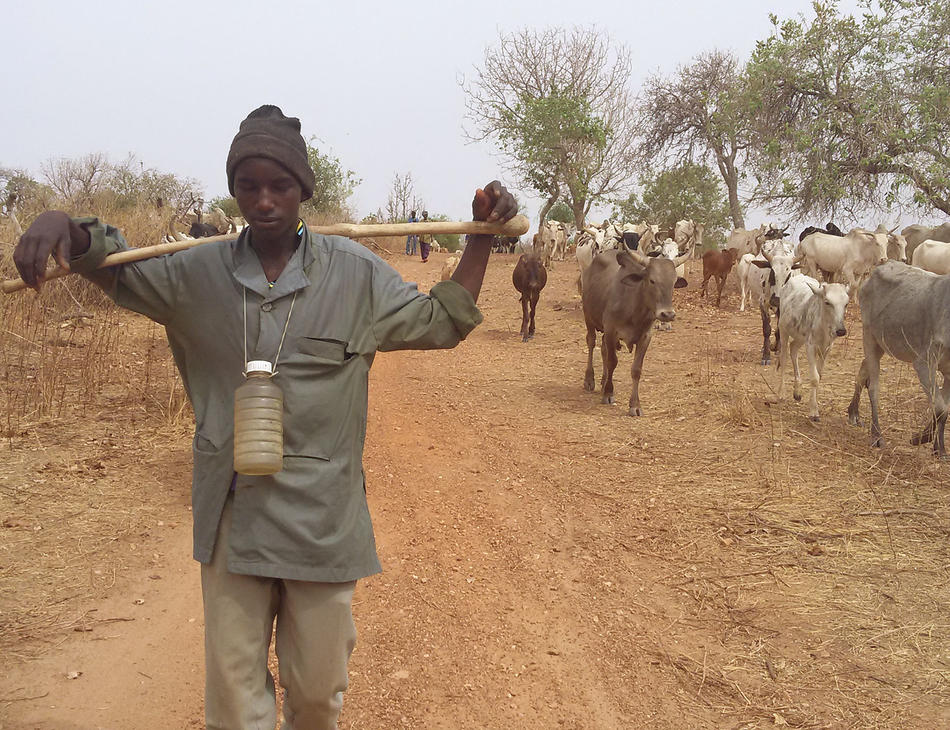 A migratory cattle herder in Burkina Faso