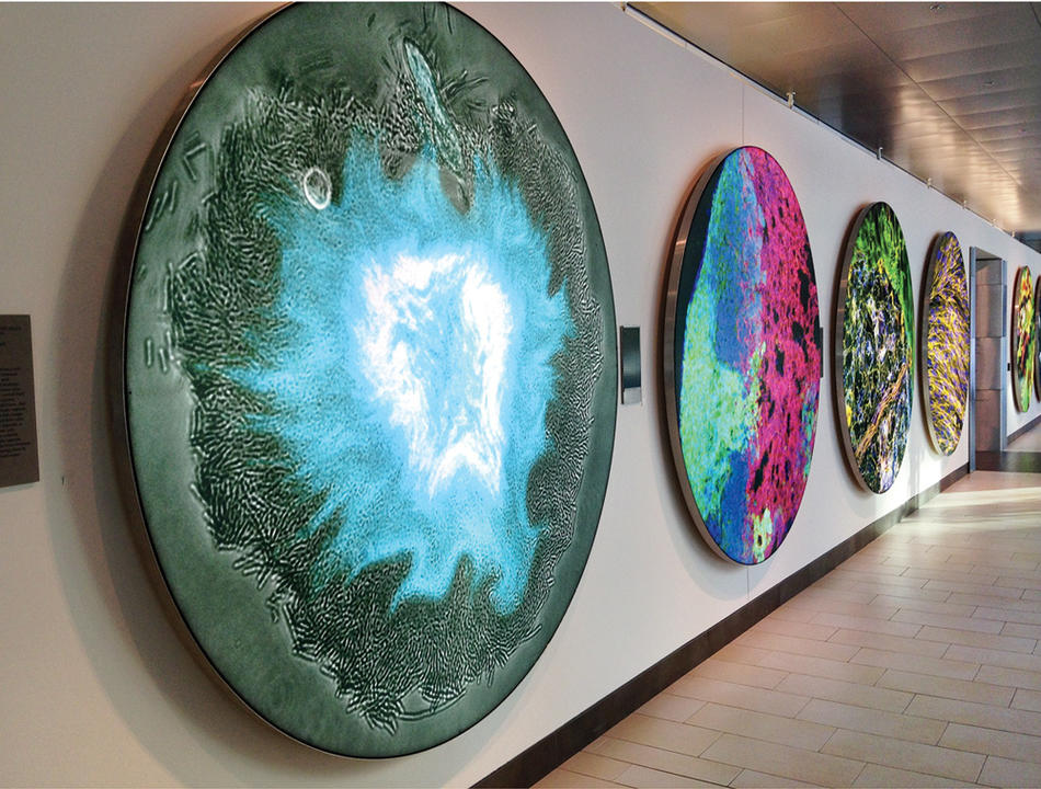 """Supernova,"" 2014, at Koch Institute Public Galleries, Cambridge, Massachusetts. By Columbia biomedical engineer Tal Danino."