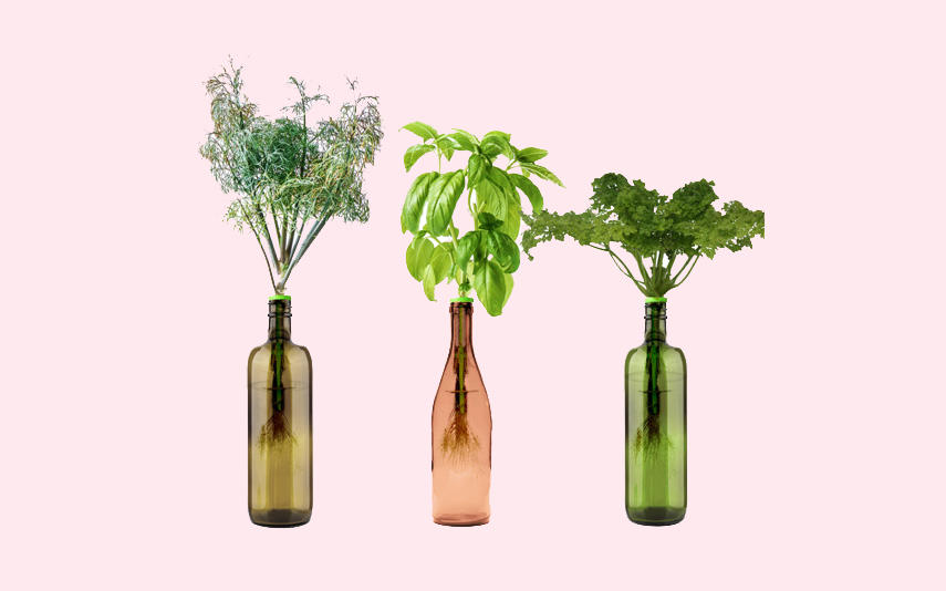 Home-gardening kits from Urban Leaf